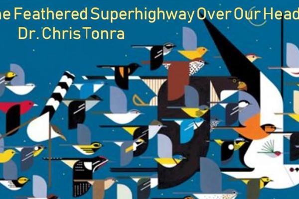 Feathered Superhighway